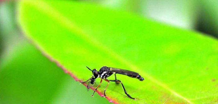 Moustiques en France : quels sont les risques ?